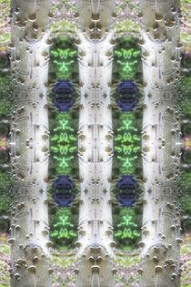 Baumpilze von mario-s