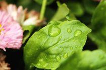 Afte the rain von Luisa Azzolini