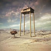 Home of Emu by Dariusz Klimczak
