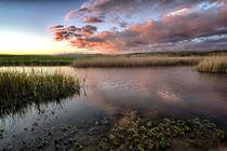 Duck Ponds von Dave Wilkinson