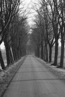 Einsamer Weg by redeyeimages