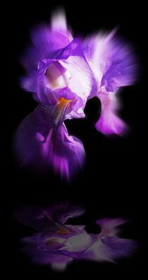 Blütenträume 6 by Walter Zettl