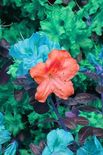 Fantaisie de couleurs I von lorenzo-fp