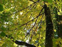 Blätterdach von Esty Bisig