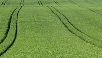 Felder von fabinator