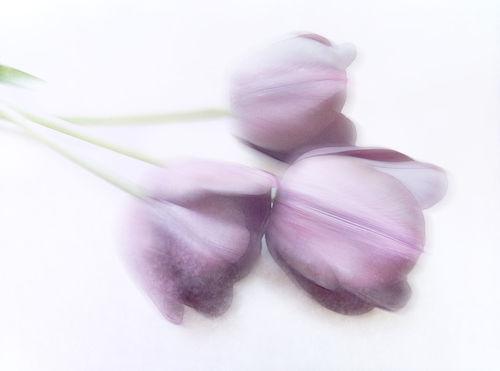Soft-lila