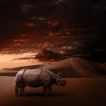 Rhino by Andreas Plöger