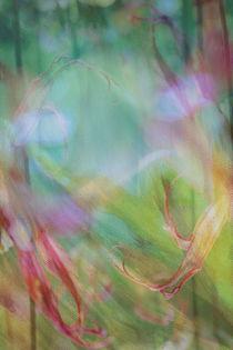 Grasgeflüster von © Ivonne Wentzler