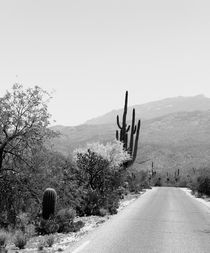Saguaro and Everything von Kume Bryant