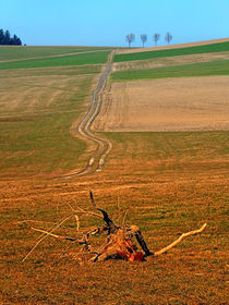 Endloser Pfad, Allee am Horizont | Landschaftsfotografie by Patrick Jobst