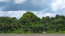 Regenwald am Amazonas von reisemonster