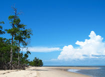 Mangroven am Ozean by reisemonster