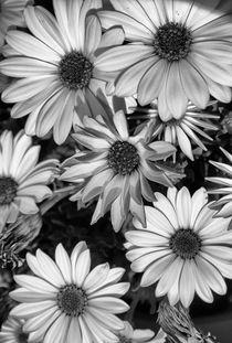 Spring life von Laura Benavides Lara
