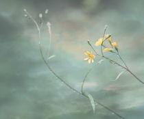 Voller Anmut by © Ivonne Wentzler