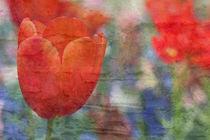 flora von © Ivonne Wentzler