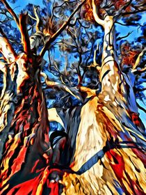 Tall Tree by Ken Unger