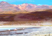 Flamingos auf 4000 m von reisemonster