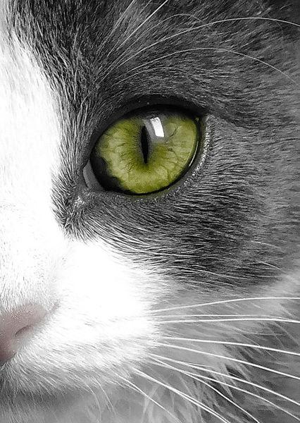 Katze-auge