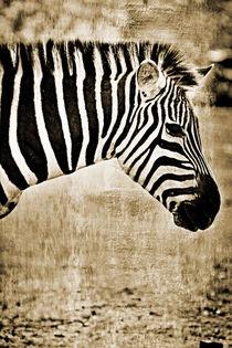 Zebra Nr. 004   -   RETRO von leddermann