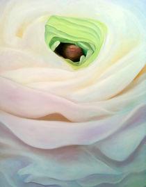 Ranunculus by Christina Rahm
