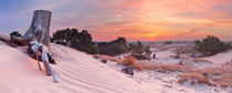 Dune Sunrise von Sara Winter