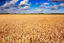 Golden Wheat von Sara Winter