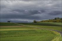 Une route 2 arbres et une poignée de nuages // Eine strasse 2 Bäume und einige Wolken // A road 2 trees and some clouds  by Olivier Mavilia