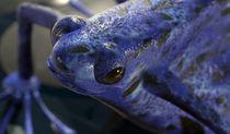 Grenouille en 3D // Frog in 3D  // Frosch in 3 Ds by Olivier Mavilia