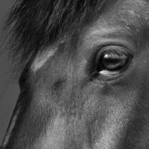 L'oeil du cheval // Das Auge des Pferds // The eye of the horse  von Olivier Mavilia