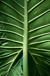 Green leaf by Christina Rahm