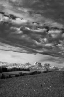 Prairie // Wiese // Meadow land  von Olivier Mavilia