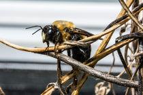 Flowers-bees-april-may-backyard-macros-129-nowm
