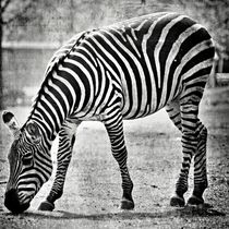 ZEBRA No. 005 by leddermann
