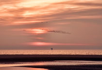 Sunset-with-birds