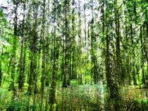 Wald2fin