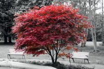 Roter Baum by Joachim P. Pudrel