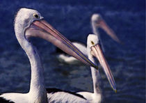 Three Pelicans (Impressionist) by David Halperin