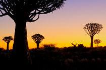 Namibian feeling by Andy-Kim Möller