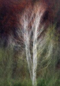 Impressionistic birch von Andy-Kim Möller