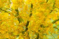 Autumn colors von Andy-Kim Möller