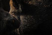 Dark boar von Andy-Kim Möller