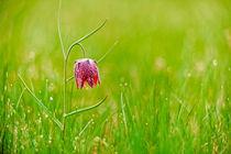 Gently blossom von Andy-Kim Möller