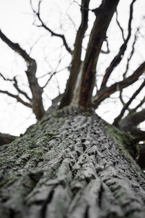 Oak skin by Andy-Kim Möller