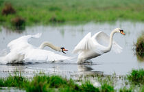 Chasing swans 2 by Andy-Kim Möller