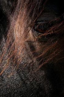 Horse eyes von Andy-Kim Möller