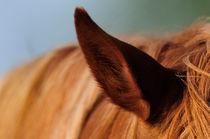 Horses ear by Andy-Kim Möller