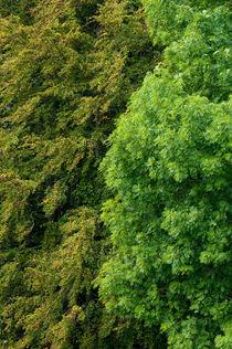 Green leafs von Andy-Kim Möller