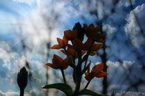 Blumenblickfang von Su Purol