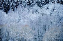 The frost von Andy-Kim Möller