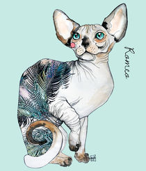 Romeo the sphynx by Sara Ligari
